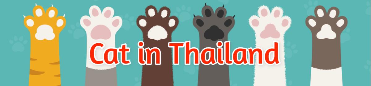 Cat in Thailand キャット・イン・タイランド